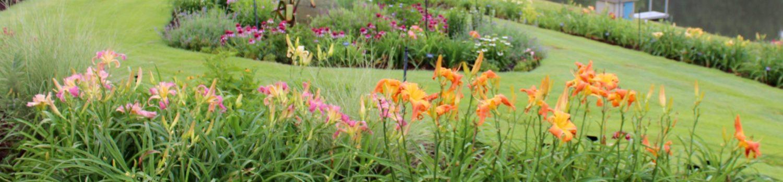 Windyhill Daylily Garden